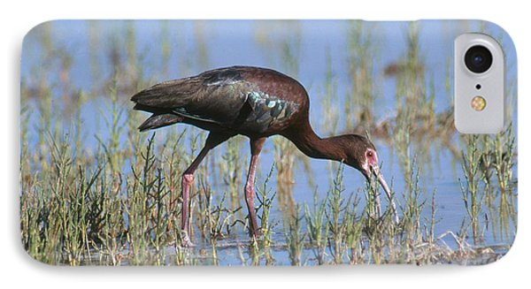 White-faced Ibis IPhone 7 Case by Anthony Mercieca