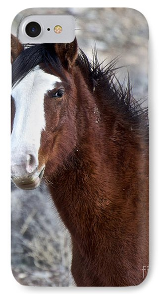 White-faced Mustang In December V IPhone Case