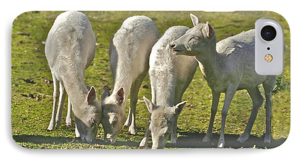 White Fallow Deer Mt Madonna County Park IPhone Case