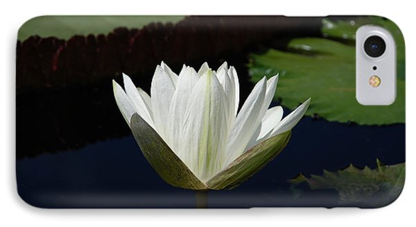 IPhone Case featuring the photograph White Flower Growing Out Of Lily Pond by Jennifer Ancker