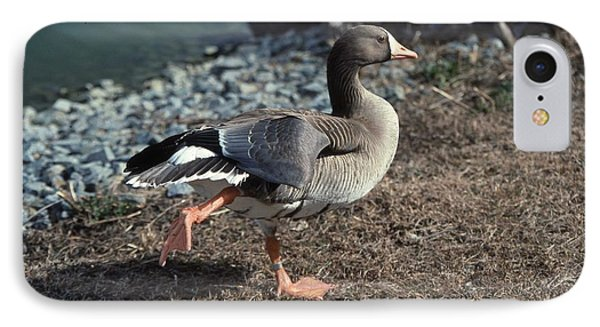 White Fronted Goose Phone Case by Skip Willits