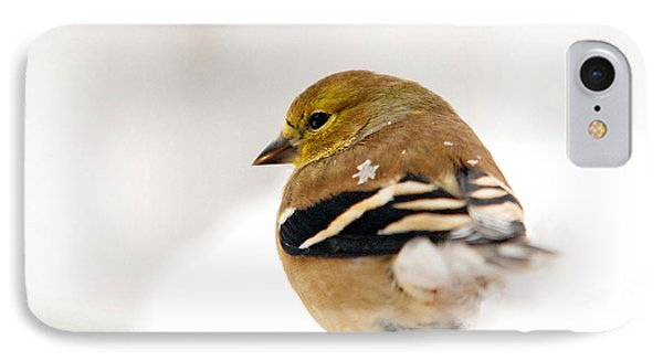 White Gold Goldfinch IPhone Case by Christina Rollo