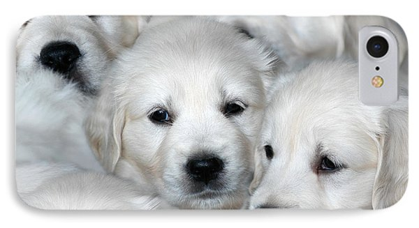 White Golden Retriever Puppies IPhone Case by Dog Photos