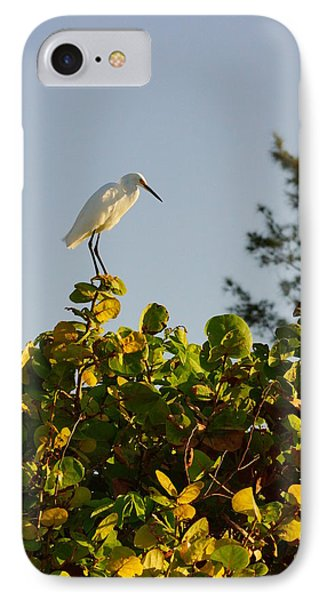 White Ibis And Sea Grapes IPhone Case