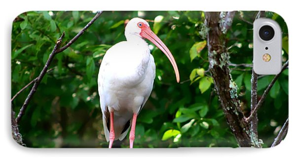 IPhone Case featuring the photograph White Ibis by Debra Forand