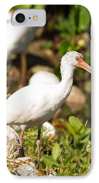 White Ibis On The Hunt IPhone Case by Natural Focal Point Photography