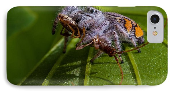 White Jumping Spider With Prey Phone Case by Craig Lapsley