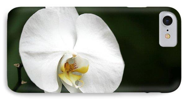 White Light Phone Case by Sabrina L Ryan