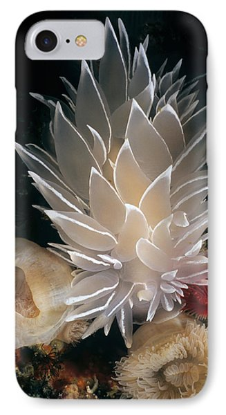 White-lined Dirona Nudibranch IPhone Case by Jeff Rotman