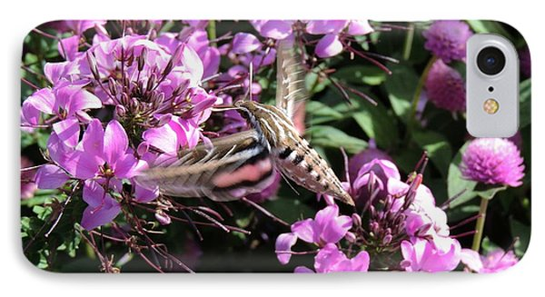 White-lined Sphinx Moth IPhone Case by Teresa Schomig