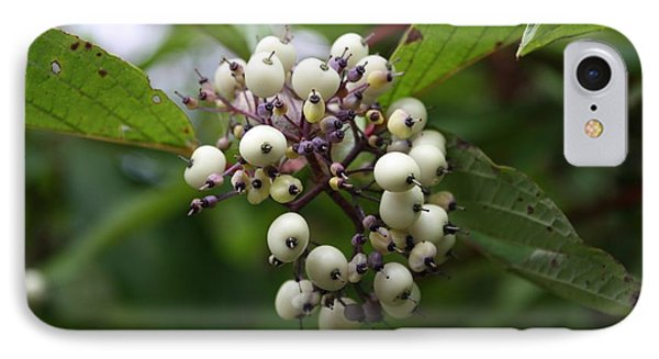 IPhone Case featuring the photograph White Mountain Berries by Amanda Holmes Tzafrir