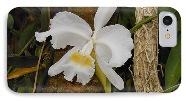 White Orchid IPhone Case by Kay Gilley