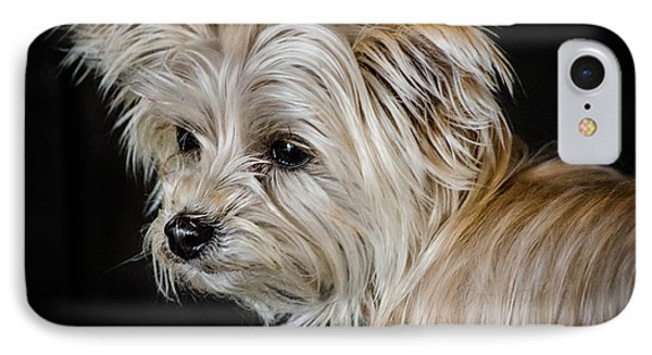 White Puppy IPhone Case by Linda Villers