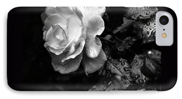 White Rose Full Bloom IPhone Case by Darryl Dalton