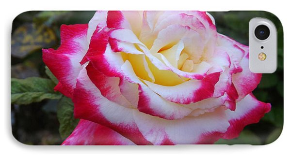 White Rose With Pink Texture Hybrid IPhone Case by Lingfai Leung