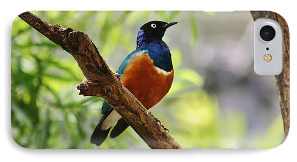 IPhone Case featuring the photograph White-rumped Shama by Craig Wood