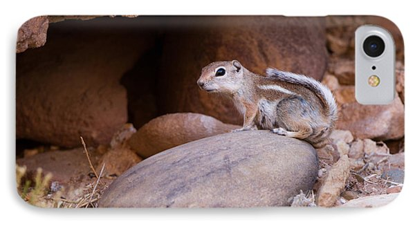 White-tailed Antelope Squirrel IPhone Case by Martha Marks