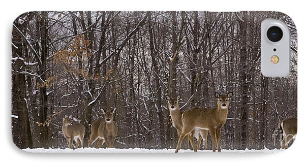 White Tailed Deer IPhone Case by Anthony Sacco