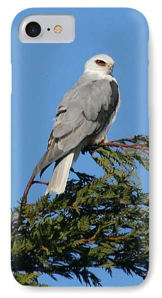 IPhone Case featuring the photograph White-tailed Kite Perching by Bob and Jan Shriner