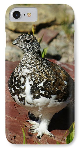 IPhone Case featuring the photograph White-tailed Ptarmigan by Sue Smith