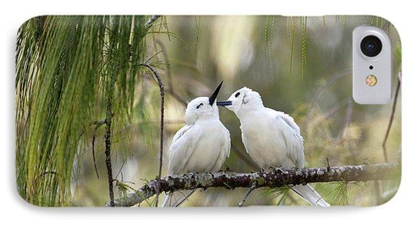 White Terns (gygis Alba Rothschildi IPhone Case by Daisy Gilardini