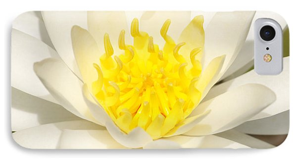White Waterlily IPhone Case by Olivia Hardwicke