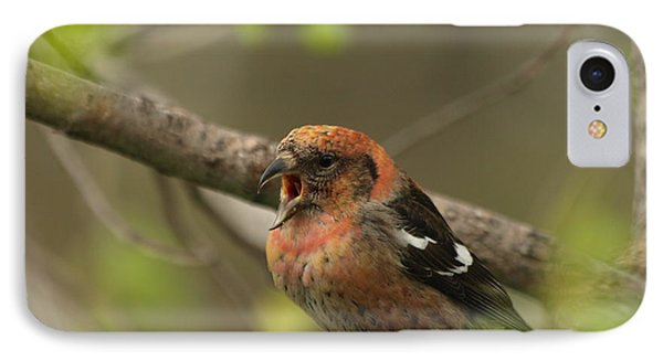 White-winged Crossbill IPhone Case by James Peterson