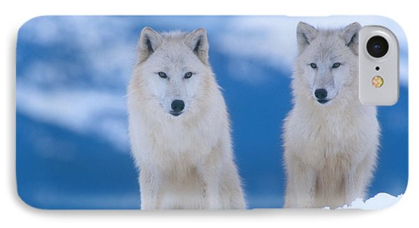 White Wolf Pair In Winter Phone Case by Alan and Sandy Carey
