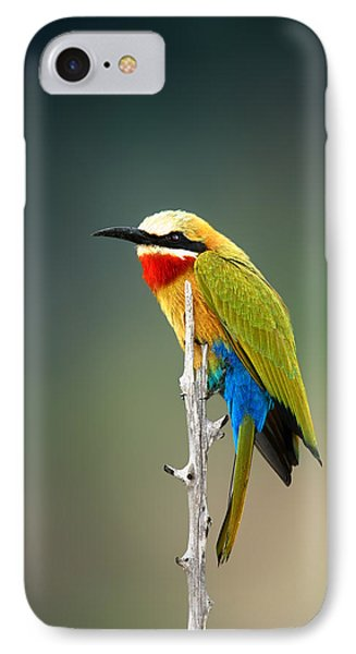 Whitefronted Bee-eater Phone Case by Johan Swanepoel