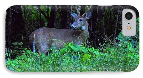 Whitetail Buck 015 IPhone Case by Chris Mercer