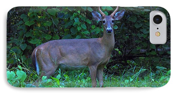 Whitetail Buck 029 IPhone Case by Chris Mercer