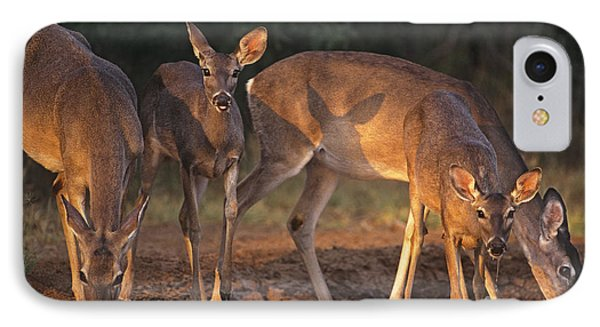 Whitetail Deer At Waterhole Texas IPhone Case by Dave Welling