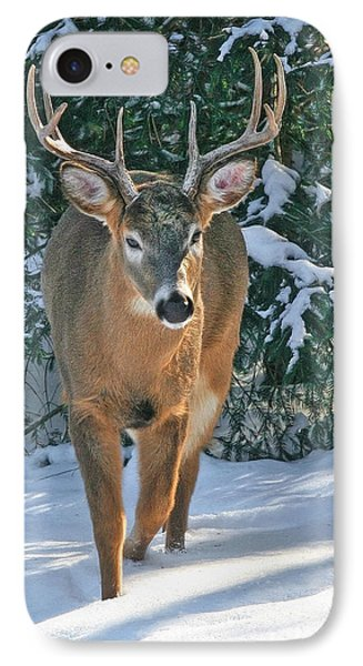 Whitetail Deer Eight Point IPhone Case by Clare VanderVeen