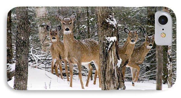 Whitetail Deer Odocoileus Virginianus Phone Case by Gregory K Scott