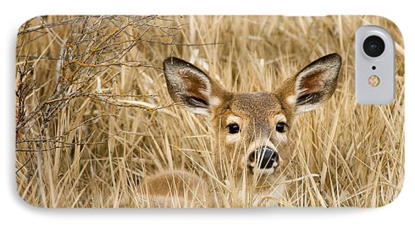Whitetail In Weeds IPhone Case