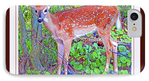 IPhone Case featuring the photograph Whitetailed Deer Fawn In A Forest  by A Gurmankin