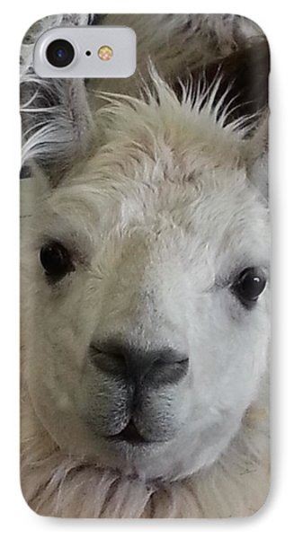 IPhone Case featuring the photograph Who Me Llama by Caryl J Bohn