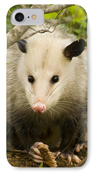 Who Says Possums Are Ugly IPhone Case