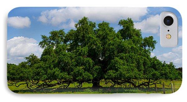 Wide Oak IPhone Case by Jerry Hart