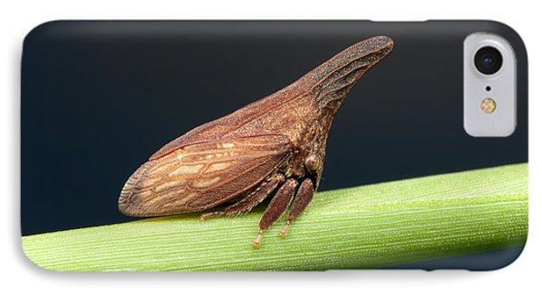Widefooted Treehopper II Phone Case by Clarence Holmes
