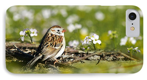 Wild Birds - Field Sparrow Phone Case by Christina Rollo