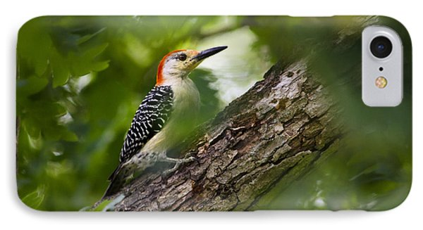 Red Bellied Woodpecker IPhone 7 Case by Christina Rollo