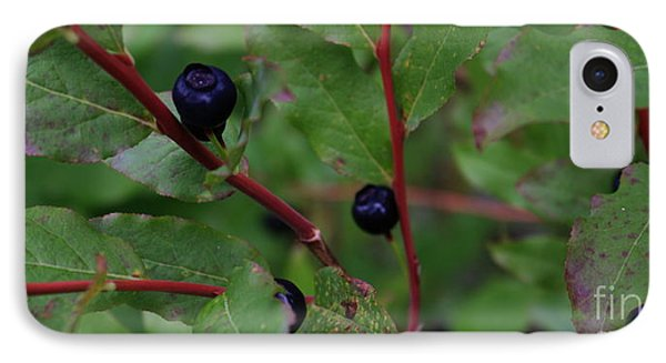 IPhone Case featuring the photograph Wild Blueberries by Amanda Holmes Tzafrir