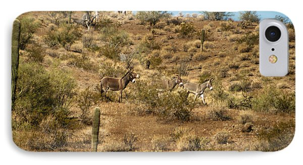 Wild Burros Phone Case by Robert Bales
