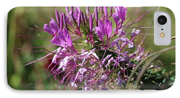 Wild Flower IPhone Case by Cynthia Snyder