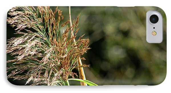 IPhone Case featuring the photograph Wild Grasses II by Kimberly Mackowski