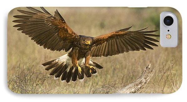 Wild Harris Hawk Landing IPhone Case by Dave Welling