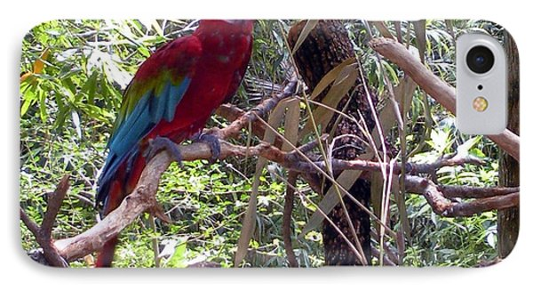 IPhone Case featuring the photograph Wild Hawaiian Parrot  by Joseph Baril