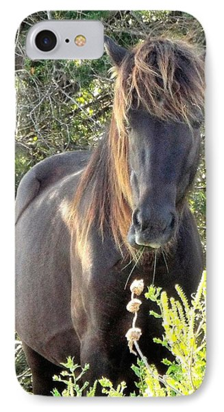 Wild Horse Close Up IPhone Case by Cindy Croal
