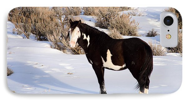 Wild Horse Stallion IPhone Case